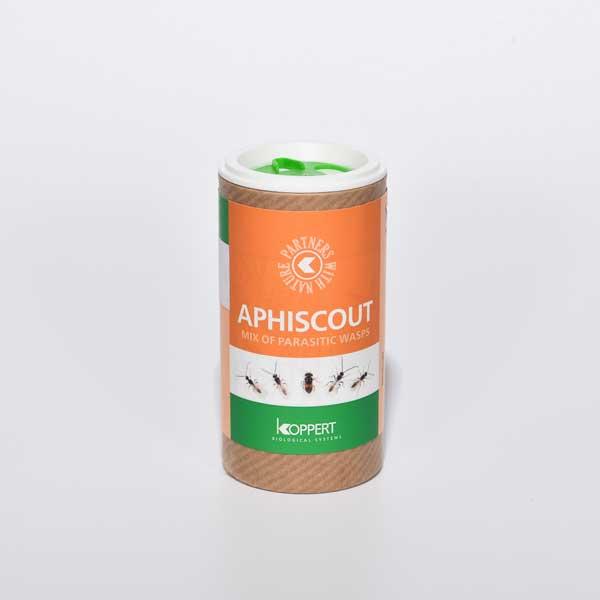 Aphiscout, mix van 5 soorten sluipwespen tegen bladluis