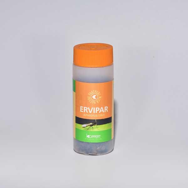 ERVIPAR, 500 sluipwespen tegen bladluis