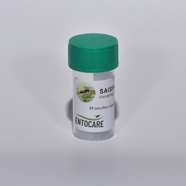 SAISIN-C sluipwesp voor biologische bestrijding van dopluis