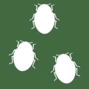 Adalia bipunctata group icon 200x200