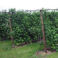 Fruitteelt biologische bestrijding