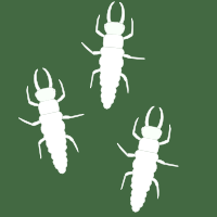 Lacewing larvae icon