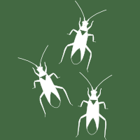 Macrolophus true bug icon
