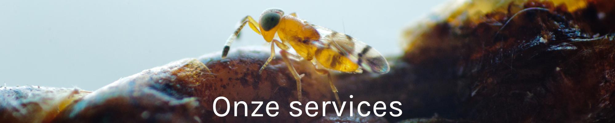 Onze services banner