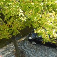 Openbaar groen biologische bestrijding