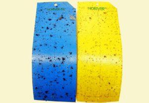 Blauw en gele vangplaten